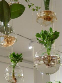 Beautiful hanging plant installation  Michael Anastassiades' exhibition at the Svenskt Tenn Store in Stockholm: Decor, Hanging Plants, Kickcan, Beautiful Hanging, Gardening, Exhibition, Plant Installation, Conkers