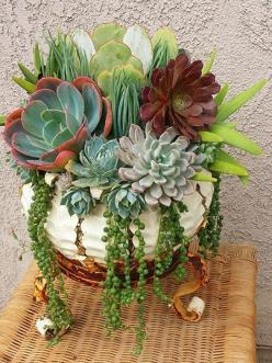 Beautiful succulent container - Nature Containers Vintage Garden Art - Google Search: Nature Container, Succulent Bowl, Succulent Containers, Delicious, Succulent Arrangement, Containers Vintage