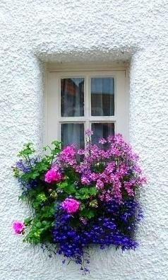 Beautiful window box...  Beautiful colors against the white stucco make this arrangement pop!: Beautiful Flower, Flowerbox, Beautiful Window, Windows, Garden, Flower Boxes, Window Boxes