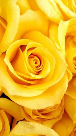 Beautiful yellow rose...a soft and lovely fragrance component of Aesthetic Content's Giardino Blossom Luxury Scented Soy Candle.  Ylang ylang, jasmine, rose and gardenia: Yellow Flowers, Favorite Flowers, Color, Mellow Yellow, Beautiful, Google Search