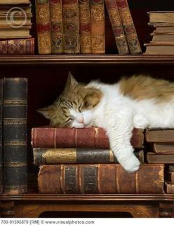 Beauty sleep!: Cats, Books, Reading, Animals, Favorite Things, Cat Nap, Pet, Kitty, Cat Lady