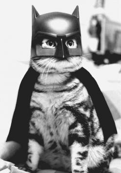 Because he's the hero Gotham deserves, but not the one it needs right now. So we'll hunt him. Because he can take it. Because he's not our hero. He's a silent guardian, a watchful protector. A dark knight.: Batcat, Cats, Animals, Bats, Pet, Funny, Costume