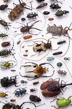 Beetles!   Has anyone else seen pictures of roaches dressed up like celebrities ?  The roach in the left top corner could be wearing a white & rhinestone cape.  Awful, but funny.: Amazing Insects, The Beatles, Bugs And Insects Photos, Animals, Beetles