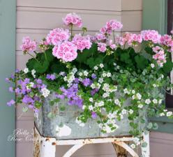 Bella's Rose Cottage: After the Rain...: Garden Container, Container Gardens, Windowbox, Outdoor, Flowers, Container Gardening, Window Boxes