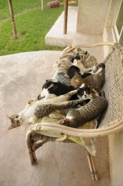 Bench full of fun!: Crazy Cats, Cat Bench, Animals, Pet, Bench Full, Crazy Cat Lady, Feline, Friend