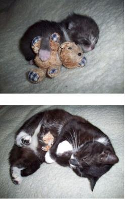 best friends, forever.: Cats, Kitten, Animals, Sweet, Teddy Bears, Growing Up, Baby, Kitty