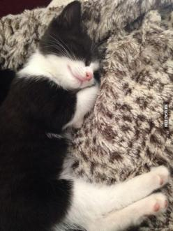 BF's new Kitten sleeps with her paws underneath her head: Cats, Sweet, Cat Nap, Baby, Kittens, Kitten Sleeps, Animal