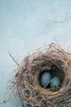 Bird's nest #patternpod #beautifulcolor #inspiredbycolor: Birdnests, Blue Eggs, Bird Nests, Robins Egg