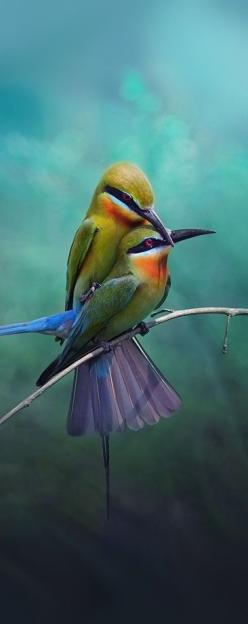 Birds in love - Reminds me of how one should always feel protected by their lover, not frightened or harmed.: Colorful Birds, Birds Beyond, Birds Bee Eaters, Animals In Nature, Birds Doin, Beautiful Birds, Beautiful Nature Animals