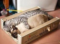box #cat #kitten #meow: Cats, Animals, Sweet, Bed, Boxes, Pets, Kitty Kitty, Funny Animal, Kitties