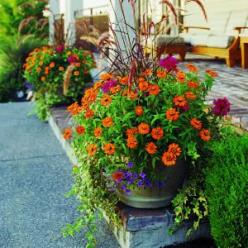 Breathtaking pots w/ how to's!  Will try this.: Garden Container, Container Gardens, Garden Ideas, Flower Pot, Gardening Ideas, Container Planting, Pot Garden, Container Gardening