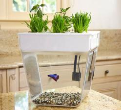 Bring the garden inside with a self-cleaning fish tank that grows food! The Water Garden (formerly the Aqua Farm) creates a closed-loop ecosystem—the fish feed: Gift, Fish Tanks, Farms, Farm Self Cleaning, Self Cleaning Fish, Fishtank, Aqua Farm, Water Ga