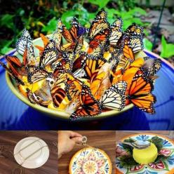 Butterfly Feeder..Fill your garden with beautiful butterflies by hanging a specially created feeder that will have them flooding your yard.: Bowl, Orange Slices, Butterfly Feeder, Gardening Outdoor, Slices Attract, Butterfly Garden