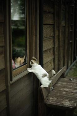 Can't you come out and play??    untitled by nekineki_ on Flickr.: Cats, Kitten, Kitty Cat, Animals, Window, Play, Kitty Kitty, Friend, Kid