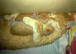 """Can You Make It Through This Post Without Saying """"Awww""""? Mother cat hugging her kittens.: Cats, Babies, Mothers Love, Animals, Sweet, Pet, Kittens, Baby, Kitty"""