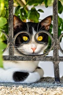 cat looking through the fence: Cats, Kitty Cat, Animals, Cat Eyes, Funny Cat, Pets, Kitty Kitty, Feline