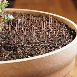Cat Scat Mats -- this should also work for keeping the squirrels from digging up my potted plants!: Cats, Garden Ideas, Gardening Tips Ideas, Gardening Ideas, Outdoor, Cat Scat, Scat Mats