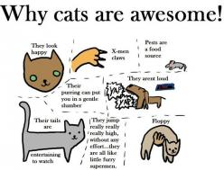 Cats are awesome: Cats, Animals, Kitty Cat, Meow, Stuff, Awesome, Funny, Crazy Cat, Cat Lady