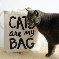 Cats Are My Bag Tote | Xenotees: All Canvas, Cat Tote, Xenotees Tote, Bag Cats, Cat Lovers, Canvas Tote Bags