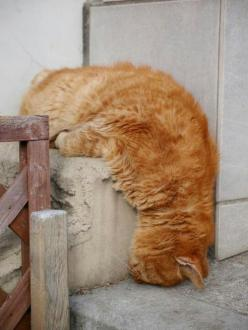Cats can sleep anywhere: Cats, Animals, Cat Nap, Funny, Chat, Sleep, Feline, Kitty