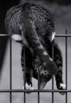 Cats: I'll figure this out eventually . . .: Cats, Animals, Funny, Crazy Cat, Kittens, Chat, Peek A Boo, Kitty