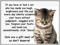 Cats so true : Cats, Kitten, Animals, Gift, Pet, Quote, Crazy Cat, Kitty, Cat Lady
