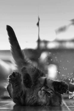"Chaton (=^.^=) Thanks, Pinterest Pinners, for stopping by, viewing, re-pinning, & following my boards.  Have a beautiful day! ^..^ and ""Feel free to share on Pinterest ^..^   #catsandme #cats: Kitty Cats, Kitten, Animals, Meow, Pet, Kitty Kitty, Felin"