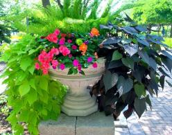 Color pop container filled with hot pink, orange, lime green flowers, potato vine and asparagus fern.: Container Pots, Container Gardens, Container Gardeningo, Colorful Container, Flowers Garden