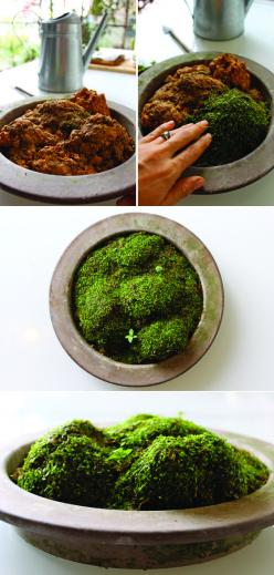 Conditions for manifestation: moss, earth, container, moisture, shade, etc: Gardening Idea, Diy Fairy Garden, Green Garden, Mini Garden, Indoor Planter, Moss Terrarium, Indoor Gardening, Moss Indoor, Moss Garden