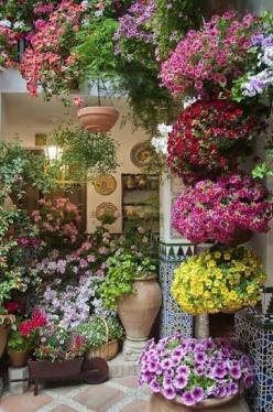 Container garden: Container Garden, Patio Idea, Outdoor, Gardens, Gardening, Flowers, Garden
