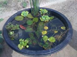 Container pond: Pond Ideas, Mini Pond, Backyard Ponds, Ponds Container Gardens, Gardening Ideas, Container Ponds, Garden Ponds, Water Garden