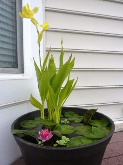 Cool idea for a water garden instead of putting in a pond. Can even have fish!: Ideas, Container Water Gardens, Diy'S, Water Features, Outdoor, Diy Container, Watergardens