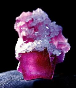 """Cranberry Fluorite crystals  covered with Calcite crystals, Anhui Province, China, 1"""": Cranberry Fluorite, Gem Stones, Mineral, Fluorite Covered, Crystals Covered, Cranberries, Rocks Gem"""