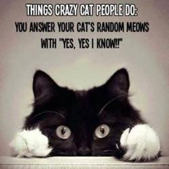 crazy cat people... The funny thing is I  do this - Always talking to my cat like he knows what I am saying LOL: Cat People, Crazy Cats, Animals, Stuff, Crazycat, Catlady, Funny, Kitty, Cat Lady