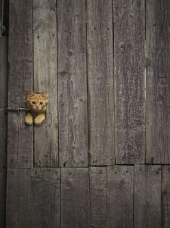 Cualquier huequito es bueno para investigar.: Doors, Cats, Kitty Cat, Kitten, Animals, Peek A Boo, Door Handle
