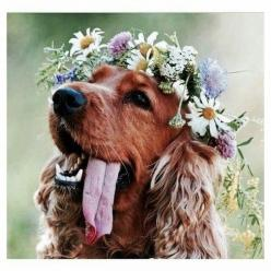 deff want my dog in my wedding, flower crown around neck of course: Animals, Bohemian Wedding Bridesmaid, Flower Crowns, Dogs In Wedding, Boho Wedding Flower Crown, Boho Wedding Bridesmaid, Bohemian Bridesmaid, Golden Retriever
