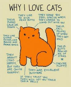 Did I mention that I love cats?: I Love Cats, Kitty Cats, Kitten, Animals, Catlady, Pet, Crazy Cat, Cat Lady
