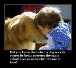 Did you know that when a dog sees its owner its brain secretes the same substances as ours when we are in love?: Animals, Dogs, Sweet, Quote, Pets, So True, Puppy, Friend