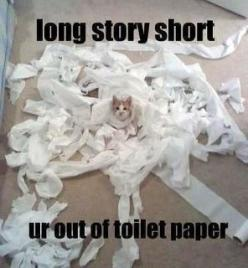 "didn't know whether to put this under ""cats or ""lol"" ha ha ha: Cats, Animals, Funny Stuff, Funnies, Funny Animal, Toilet Paper"
