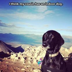 Disinterested dog...: Animals, Www Meme Lol Com, Dogs, Unimpressed Dog, Newest Meme, Funny Stuff, Cousin, Funnies