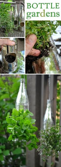 DIY Hanging Garden - Totally want to do this with St Germain $/or Roaring Dans bottles!! Kitchen sink? Backyard?: Garden Ideas, Herbs Garden, Hanging Bottle, Creative Outdoor, Outdoor Herb, Bottle Garden