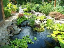 DIY water feature - i like the naturalness here, because of non-circular, non-kidney shape (ie an 'amoeba' shape) - also the mix of greenery, in and outside of water, and river rocks and gravel along some edges.: Pond Ideas, Water Gardens, Backyar