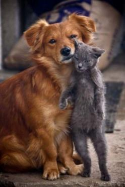 Dog and cat.: Animals, Best Friends, Dogs And Cats, Pets, Friendship, Odd Couple, Cats And Dogs