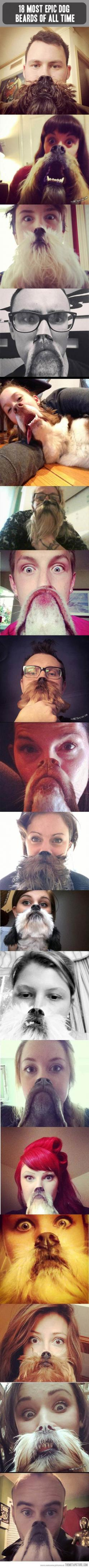 DOG BEARDS! (Image from thematapicture): Picture, Giggle, Funny Dogs, Dogbeards, Epic Dog, Animal, Dog Beards