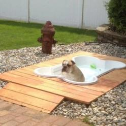 Doggy deck with an inground pool. I love this! Perfect for a backyard pet area.: Animals, Idea, Dogs, Outdoor, Pets, Backyard, Dog Pools, Doggie Pool