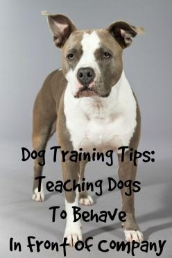 Dogs jumping on your friends or other inappropriate things? Check out these dog training tips to teach your pooch how to behave in front of company!: Dog Training Tips, Pet Training Tips, Dogs Jumping, Dog Training Jumping, How To Train Dogs, Dog Tips Tra