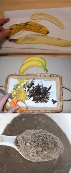 Dried Banana Peels as a Plant Fertilizer ~If you want to treat your roses & other potted plants to an inexpensive free fertilizer, don't toss out those banana peels... their peels are a great source of phosphorus, potassium and other important tra