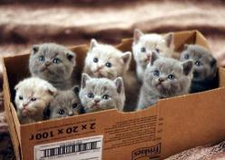 dying - box of kitties: Crazy Cats, Lady Starter, Animals, Catlady, Boxes, Kittens, Crazy Cat Lady, Kitty