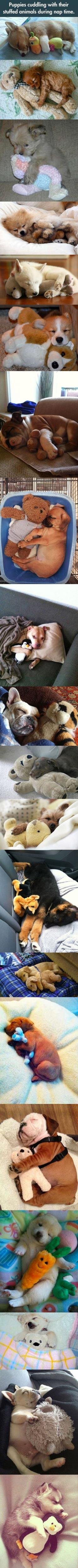 Dying: Nap Time, Stuffed Animals, Cuteness Overload, Pet, Puppys, Stuffed Toy, Dog, Puppies Cuddling