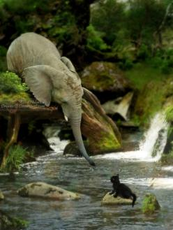 Elephants are said to be one of the most selfless animals. They seem to always go out of their way to help others.: Elephants, Cats, Baby Elephant, Help, Animals, Kitten, Sweet, Photo, Friend